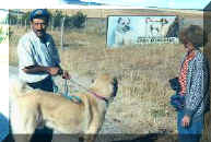 kangal kennel club